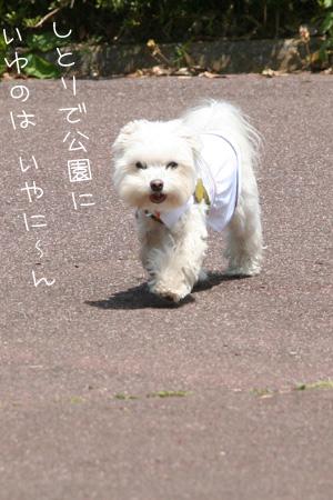 4_19_4701.jpg