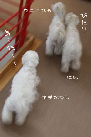 4_21_8379.jpg