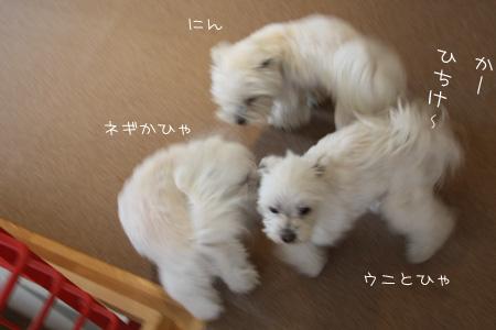4_21_8381.jpg