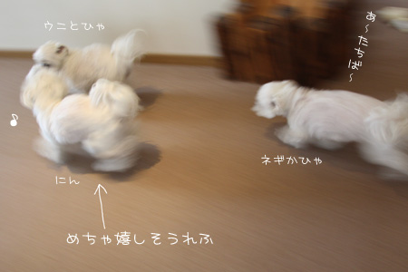 4_21_8388.jpg
