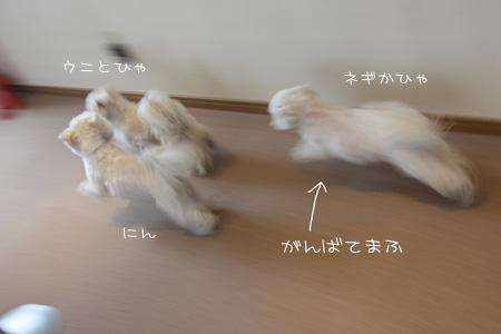 4_21_8389.jpg