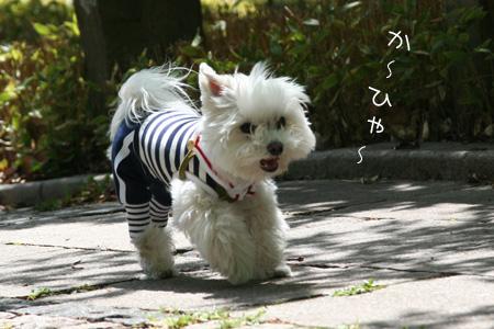 4_26_5772.jpg