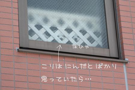 4_2_4140.jpg