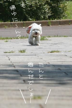 4_30_6883.jpg