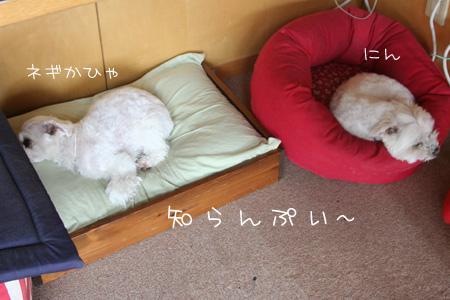 5_13_9507.jpg