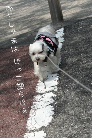 5_1_6903.jpg