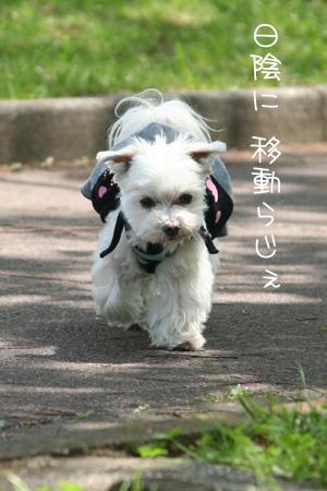 5_1_6997.jpg