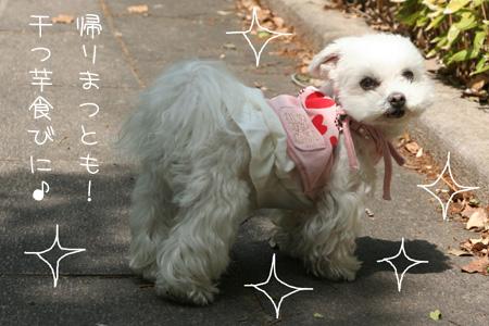 5_1_7043.jpg