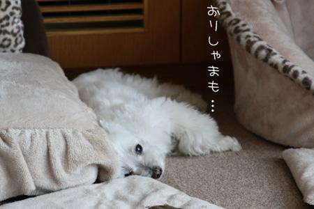 5_27_8430.jpg