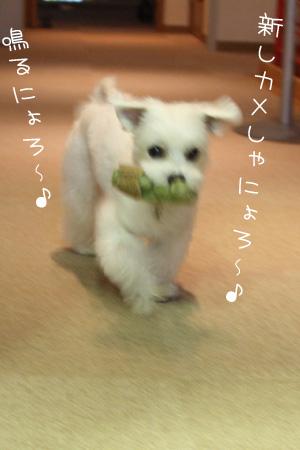 5_29_8870.jpg