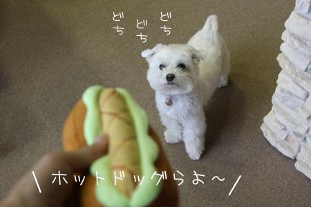 5_29_8999.jpg