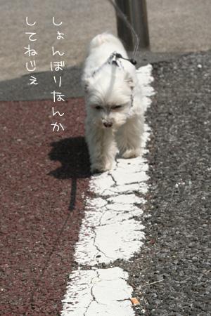 5_2_7108.jpg