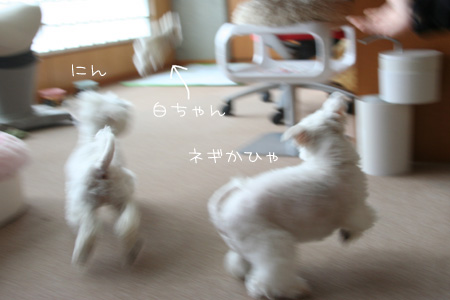 5_5_8200.jpg