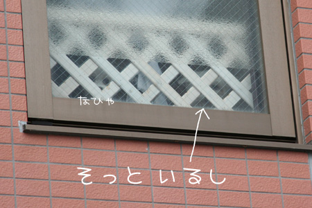 5_8_8503.jpg