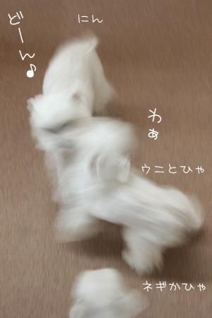 5_8_8521.jpg