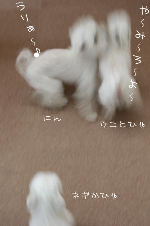 5_8_8522.jpg