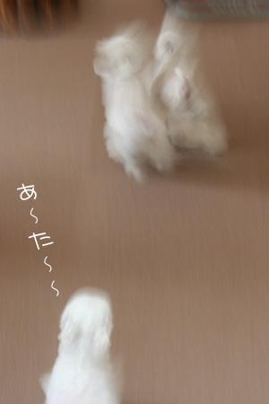 5_8_8523.jpg