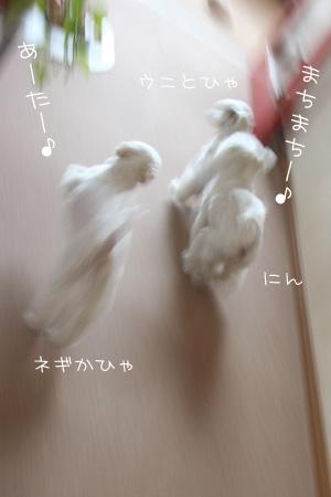 5_8_8528.jpg
