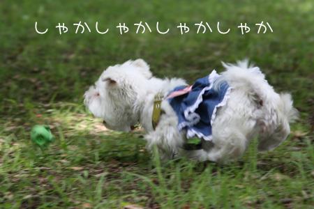 6_12_1360.jpg