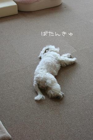6_19_3407.jpg