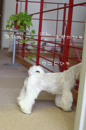 6_24_4366.jpg