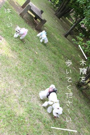 6_26_5371.jpg