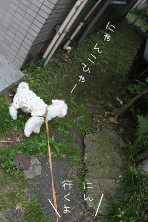 6_27_5547.jpg