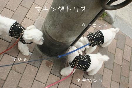 6_28_5641.jpg