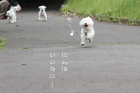 6_3_0092.jpg