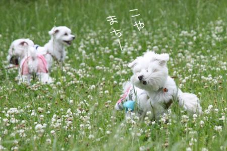 6_3_9900.jpg