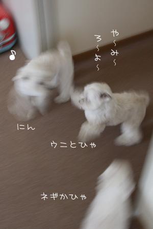 6_5_0417.jpg