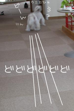 6_8_0769.jpg