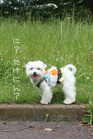 6_9_1009a.jpg