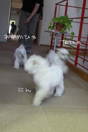 6_9_1072.jpg
