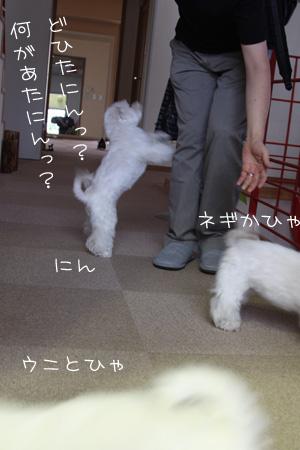 6_9_1078.jpg