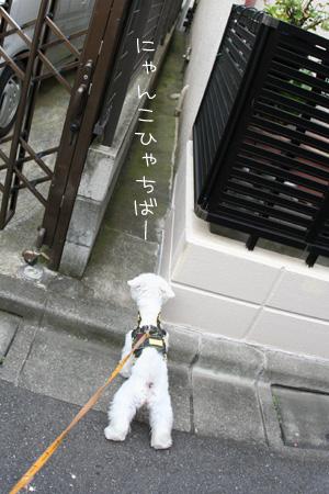 7_10_9807.jpg