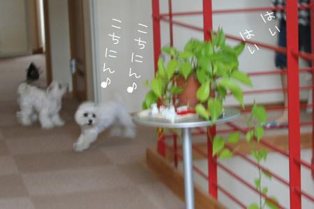 7_1_6051.jpg
