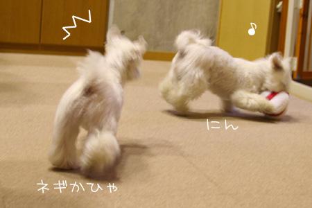 7_2_6429.jpg