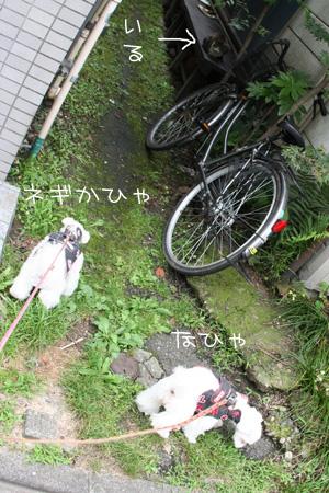 7_3_6696.jpg