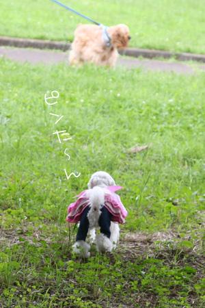 7_5_7061.jpg