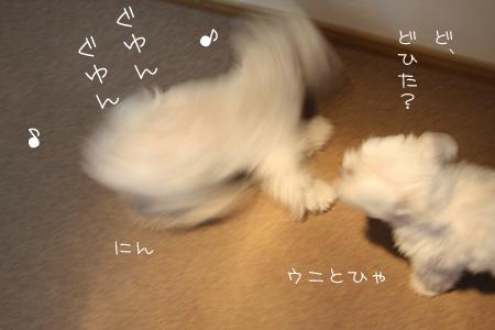 8_10_3204.jpg