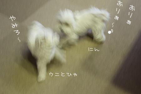 8_10_3218.jpg