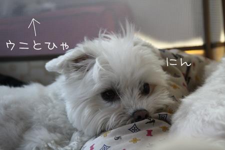 8_12_3521.jpg