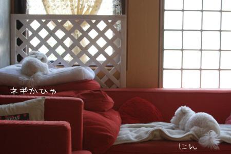 8_13_3558.jpg