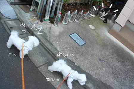 8_14_2217a.jpg