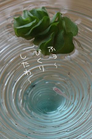 8_14_3616a.jpg