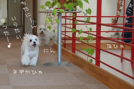 8_17_2452.jpg