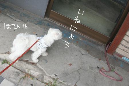 8_20_3026.jpg