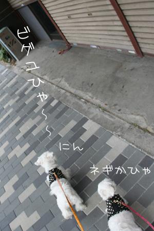 8_21_3070.jpg