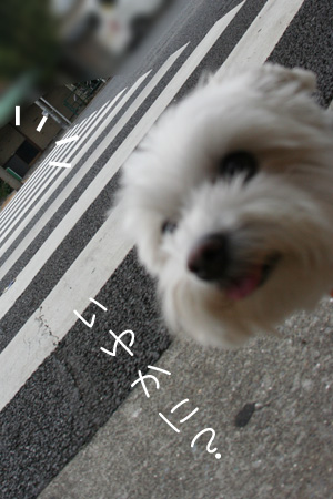8_21_3107.jpg